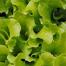 Lettuce  is like conversation; it must be fresh and crisp, so sparkling that you scarcely notice the bitter in it by Kirsten Moody