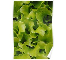 Lettuce  is like conversation; it must be fresh and crisp, so sparkling that you scarcely notice the bitter in it Poster