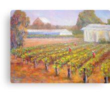 Caversham Vineyard Canvas Print