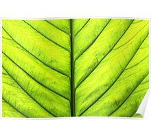 Spring Leaf Poster
