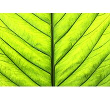Spring Leaf Photographic Print