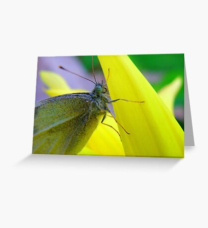 Don't it make my blue eyes... bluer Greeting Card