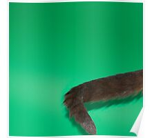 kitty tail Poster