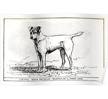 All about dogs a book for doggy people Charles Henry Lane 1900 0145 Smooth Fox Terrier_jpg Poster
