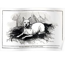 All about dogs a book for doggy people Charles Henry Lane 1900 0307 Toy Bull Terrier_jpg Poster