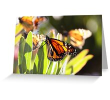 Butterfly lights Greeting Card
