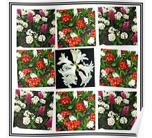 Hyacinths and Primroses Spring Collage Poster
