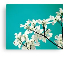 Dogwood Flowers Canvas Print