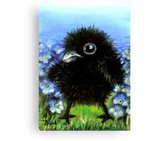 Baby raven among forget-me-nots Canvas Print