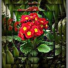 Mirrored Primrose by BlueMoonRose