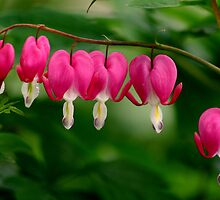 Hearts in a row (Bleeding Hearts) by mikrin
