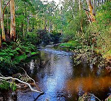 another tranquil moment,Forest Edge,Victoria by Max R Daely