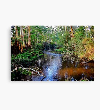 another tranquil moment,Forest Edge,Victoria Canvas Print