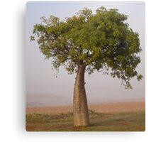 boab tree - town beach, broome Canvas Print