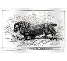 All about dogs a book for doggy people Charles Henry Lane 1900 0103 Sussex Spaniel_jpg Poster