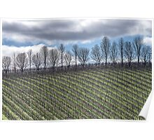 Winter Vineyard Poster