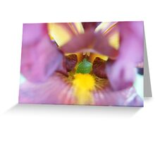 Stink bug in Hiding Greeting Card