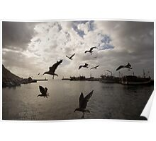 Winter Harbour with Gulls Poster