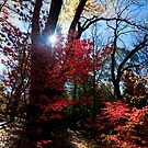 Autumn Colours Mt.Wilson Blue Mountains 2010 by MiImages