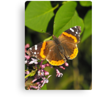 Red Admiral On A Lilac Canvas Print