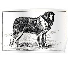 All about dogs a book for doggy people Charles Henry Lane 1900 0175 Rough St Saint Bernard_jpg Poster