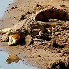 THE SUNCATCHER - THE NILE CROCODILE – Crocodylus niloticus by Magriet Meintjes