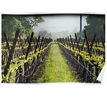 Napa Vineyard Morning Bud Break Poster
