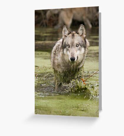 Swamp wolf Greeting Card
