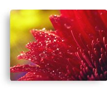 Sparkling Dew on Red Canvas Print