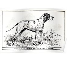 All about dogs a book for doggy people Charles Henry Lane 1900 0071 Pointer_jpg Poster