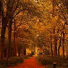 Autumn Gold by Trevor Kersley