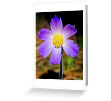 Pasqueflower Greeting Card