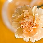 yellow carnation by cesanciano
