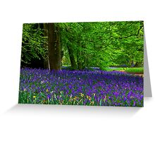 Bluebell Wood - Thorpe Perrow #1  (Spring) Greeting Card