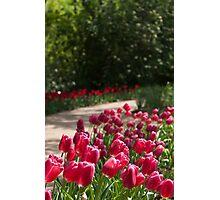 Flowering Path Photographic Print