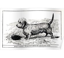 All about dogs a book for doggy people Charles Henry Lane 1900 0157 Dandy Dinmont_jpg Poster