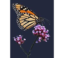 Monarch tee2 Photographic Print