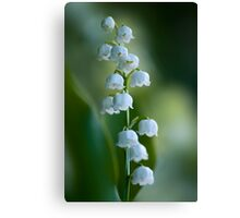 Sweet Scent of Spring Canvas Print