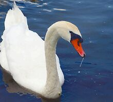 Swan glamour by ♥⊱ B. Randi Bailey