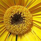 Yellow Center by Diane Trummer Sullivan
