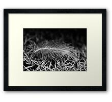 Contrast Of Lightness Framed Print