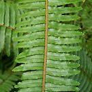 Fern Leaf by Diane Trummer Sullivan
