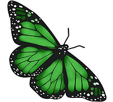 Butterfly Scarf - green Photographic Print