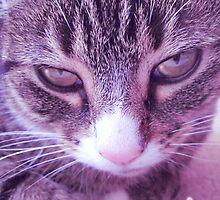 I'm just a Cat by stitchgrin