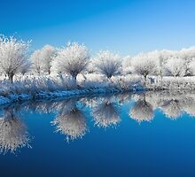 Winter White In Reflected Blue by Sol Noir Studios