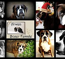 Images Of Arwen - Boxer Dogs Series by Evita