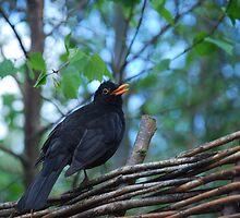 Blackbird by Grace Deen