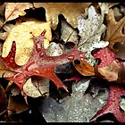 Leaves in the Rain by RTurley
