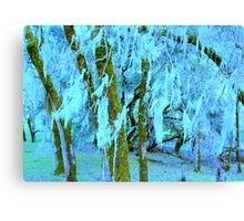 Spanish Moss, N. California Canvas Print