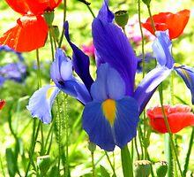 Flowers in my garden by Antionette